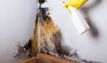 how to get rid of mold from basement