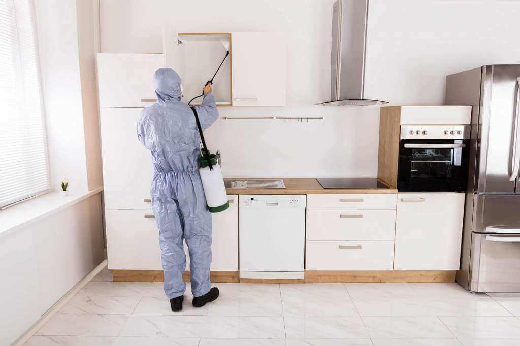 How To Get Rid Of Cockroaches In Kitchen Cabinets ...
