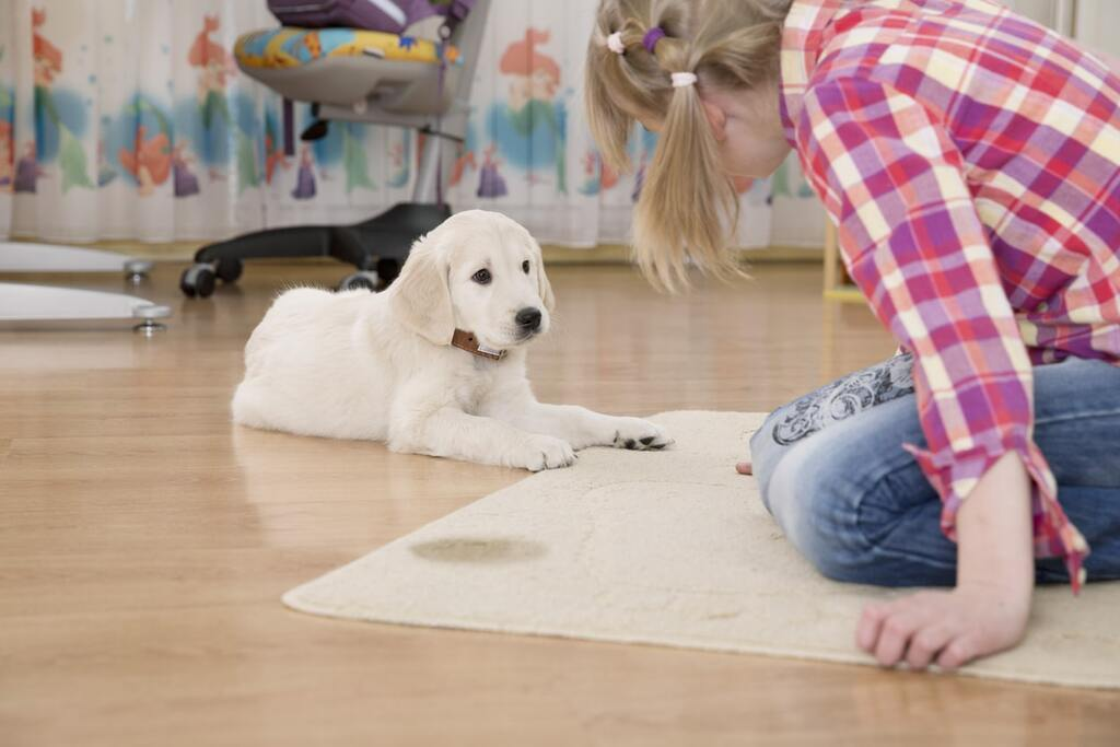How To Get Dog Pee Out Of Carpet?