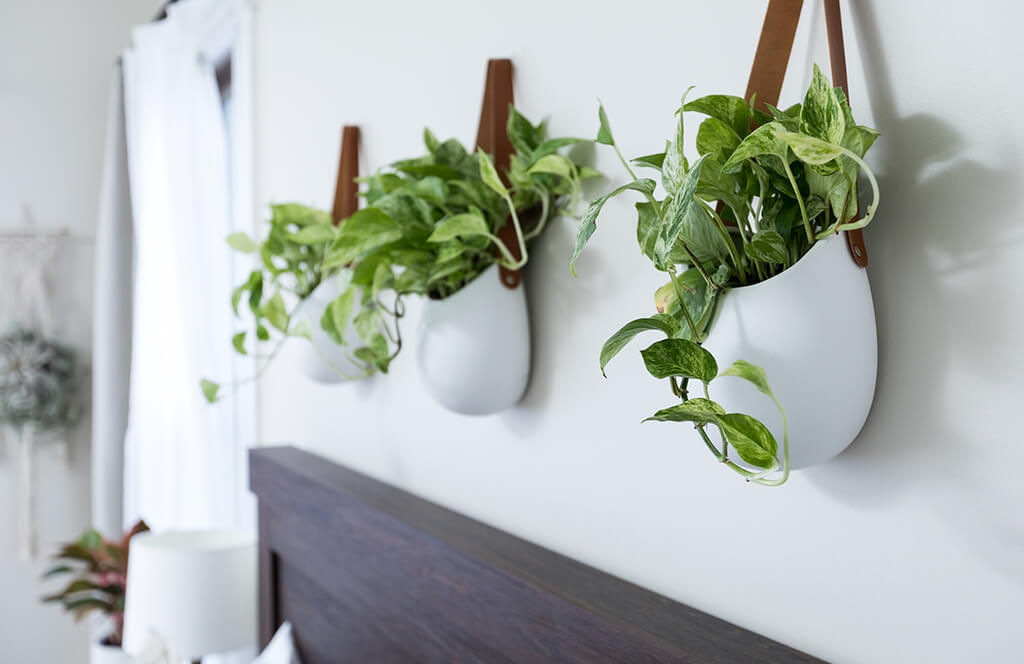Adding Life to Your Home Decor: 10 Indoor Hanging Plants