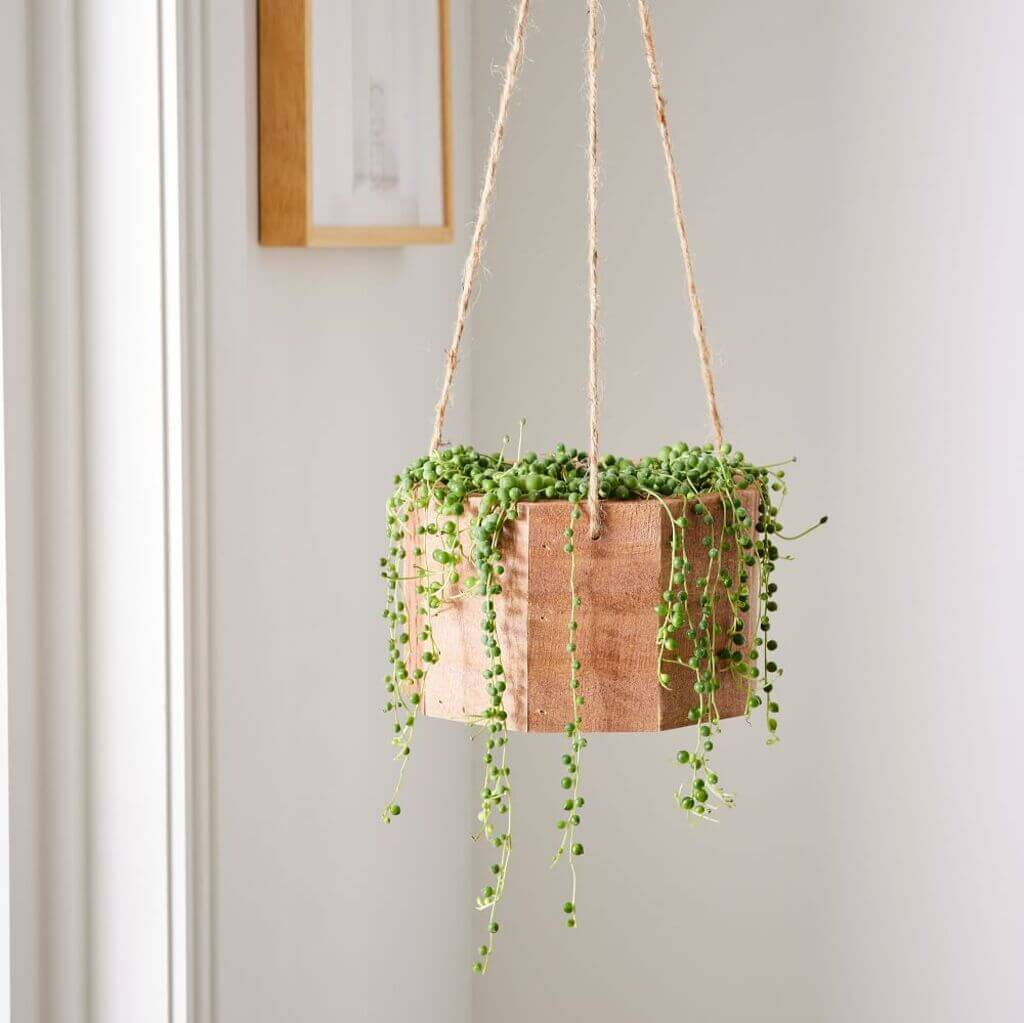 String of Pearls: hanging baskets for plants